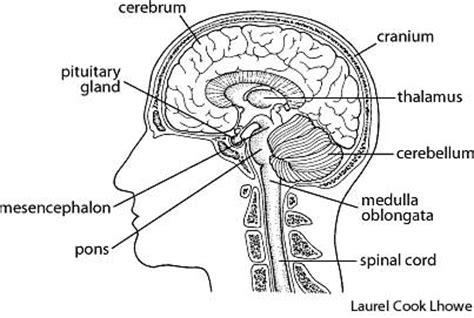 Rack Brain Definition by Brain Dictionary Definition Brain Defined