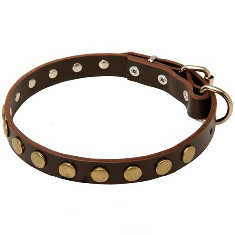 rottweiler collar 1 inch wide leather rottweiler collar with brass circles rottweiler store