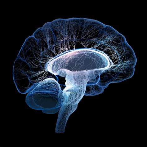 Landscape Amnesia Definition Newly Discovered Brain Region Helps Make Humans Unique