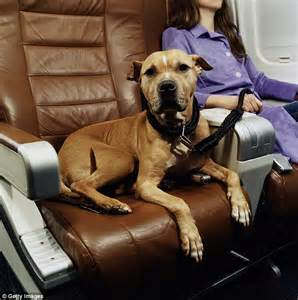 Hawaiian Airlines Emotional Support Animal Letter Us Airlines Report 17 Pet Fatalities And 35 Injuries In Just One Year Daily Mail