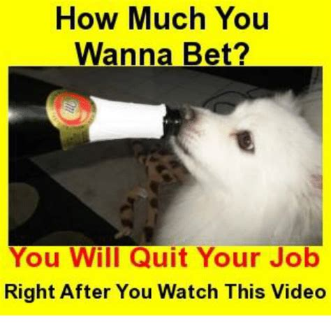 Wanna Bet Meme - how much you wanna bet you will quit your job right after