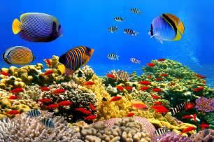 Banco de im 225 genes gratis 10 fotos del mar azul playas tropicales
