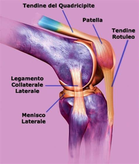 dolore interno al ginocchio dolore al ginocchio interno esterno laterale cause