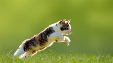 Animal Jump by Cat Jumping Animals Grass Green Background Wallpapers