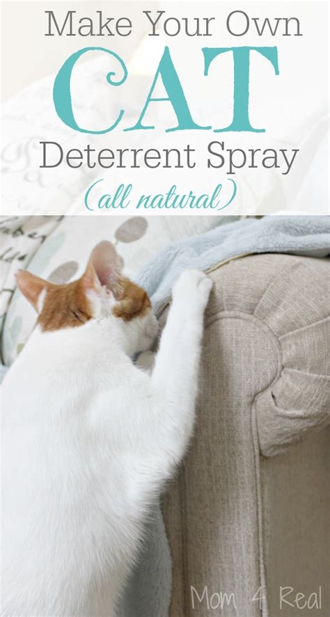 my dog keeps peeing on my couch diy dog deterrent spray helps stop indoor accidents and