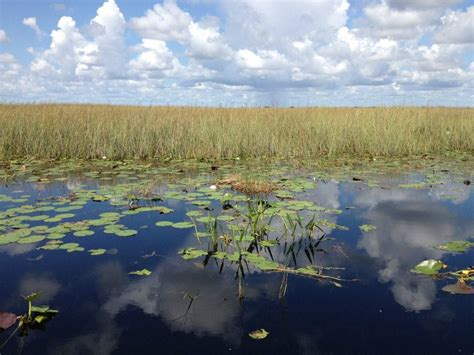 airboat tour near me buffalo tigers fl everglades airboat tours coupons near me