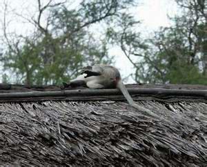 was heißt dach auf englisch tsavo ost heia safari