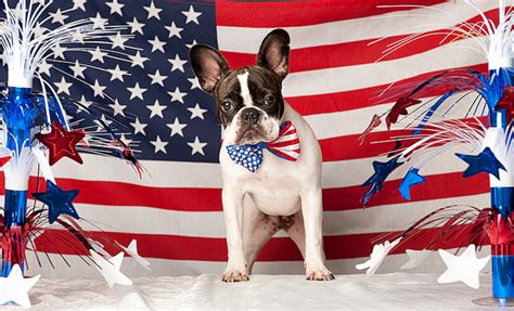 patriotic puppy names batpig and me the times and adventures of a batpig bulldog and his