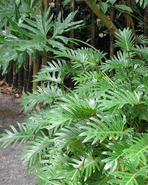 potted tropical plants easy tropical houseplants hgtv