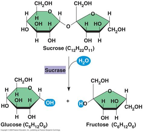 carbohydrates hydrolysis madeye s smarticle blogs september 2011