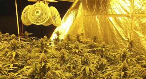 cultivos interior ventilaci 243 n en cultivos de marihuana en interior la