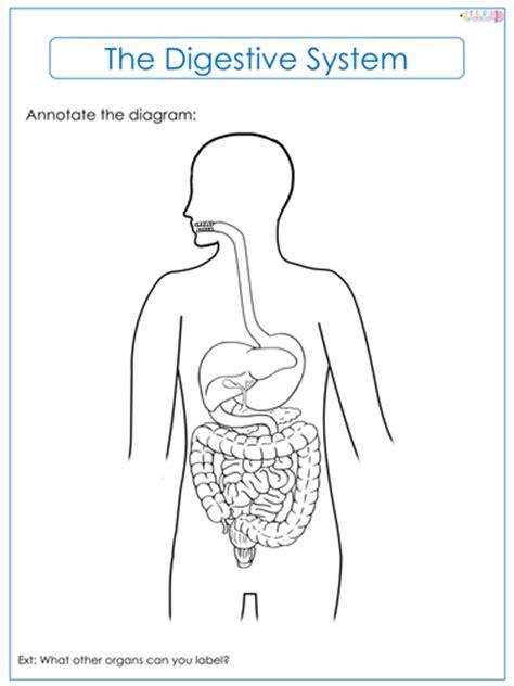 Digestive System Diagram Worksheet by Digestive System Label Worksheets By