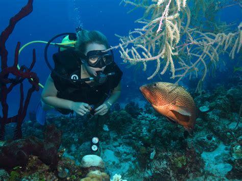 dive in scuba padi scuba diver course scuba diving varadero