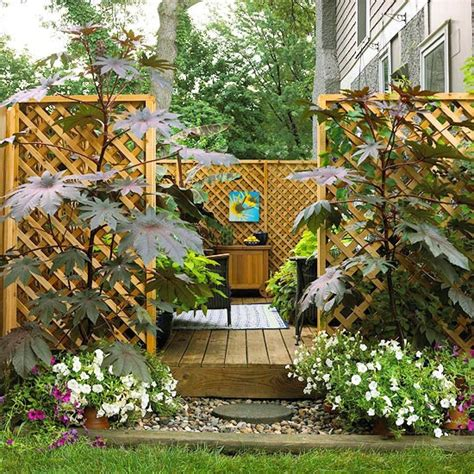 how to create backyard privacy dr dan s garden tips landscaping for privacy