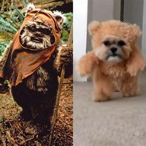 how to make ewok costume for shih tzu shih tzu ewok costume memes