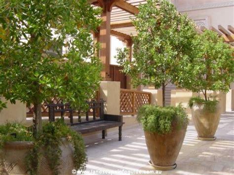 Garden Decoration Pots Ideas by Large Pots Landscape Ideas Landscape Design Ideas