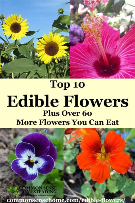 Eat At Raoaes Ae If You Can by Top 10 Edible Flowers Plus 60 More Flowers You Can Eat