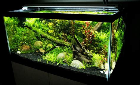 10 gallon planted tank led lighting finnex planted plus review petpetgo co