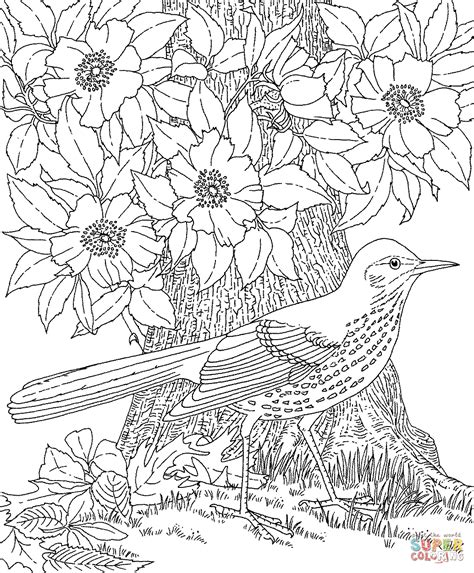 free printable coloring pages of birds and flowers brown thrasher and cherokee rose georgia bird and flower