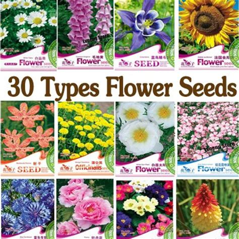 garden flowers types find your loving seeds free shipping 30 types various