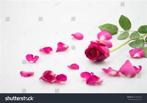 Skinnova Whitening Complete Day Pink pink background valentines day stock photo 372840487