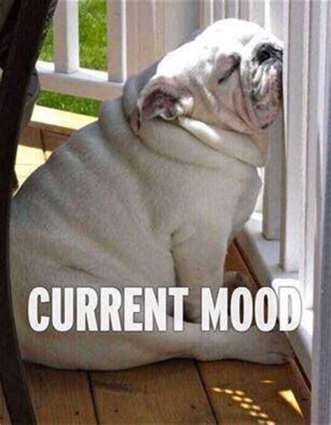 Tired Dog Meme - best 25 tired funny ideas on pinterest