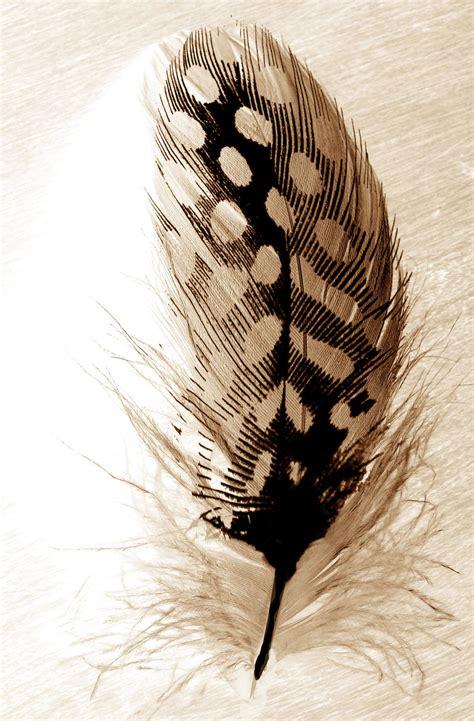 imprimer une photo sur un coussin diy coussin 224 motif plume personnalisation coussin jardinerie truffaut conseils mercerie