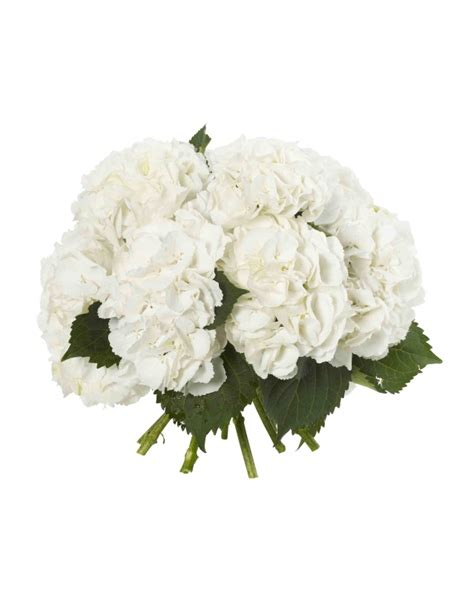 hydrangea bouquet flowerstand