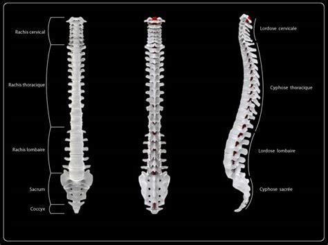 dolore osso sacro da seduta los 2 mejores ejercicios para recuperar la postura