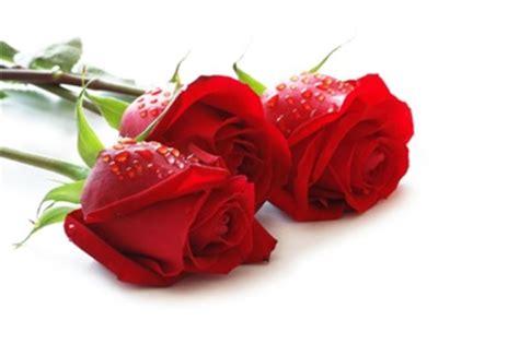 Mawar Merah Hati 9 arti warna pada bunga mawar di sini