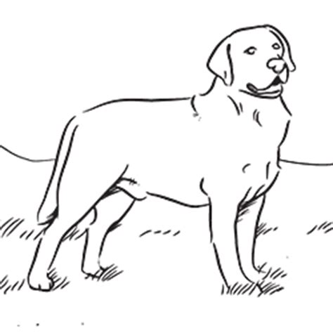 coloring pages of black lab puppies free coloring pages of labrador dogs murderthestout