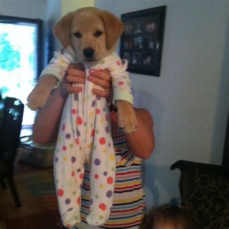 puppies in onesies puppies in onesies fuzzfeed