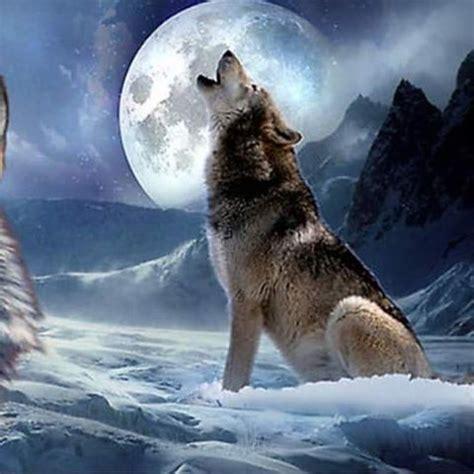 imagenes goticas de lobos lobo y love amor on instagram