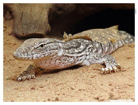 Imagenes Animales Que Viven En El Desierto | imagenes de animales que viven en el desierto