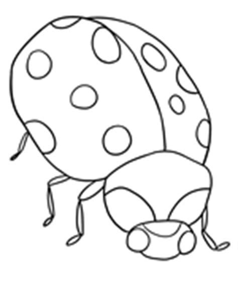 ladybug coloring page no spots ladybug no spots coloring page