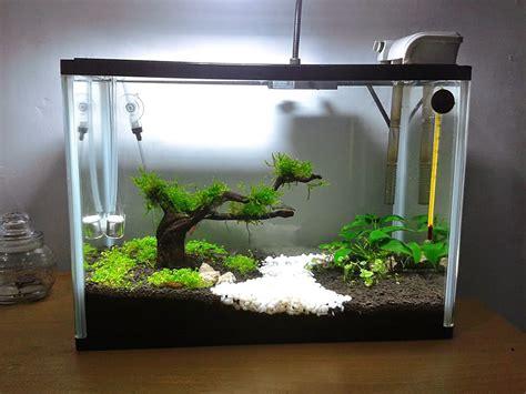 desain aquarium air tawar minimalis ikan hias air tawar aquascape
