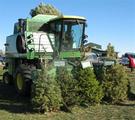 cut down your own tree in md tree farm precut trees cut your own tree