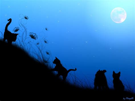 wallpaper cat night cats in the night by mango84 on deviantart