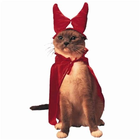 funniest cats  costumes