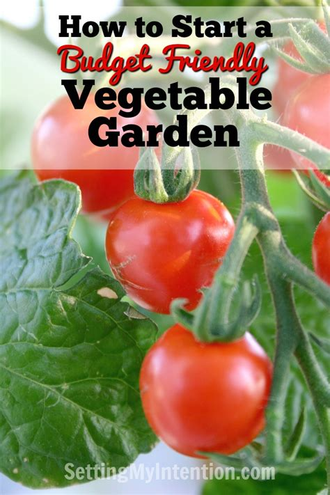 how to start a budget friendly vegetable garden