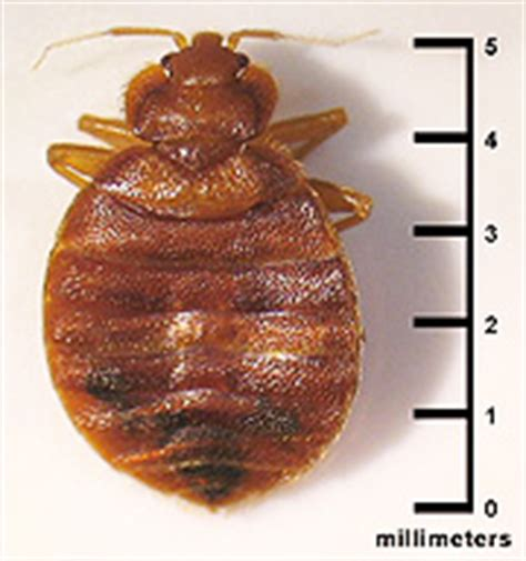 do bed bugs make you sick can bed bugs make you sick 28 images 14 best images