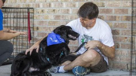 baja rescue two brothers baja rescue finds homes for dogs times of san diego