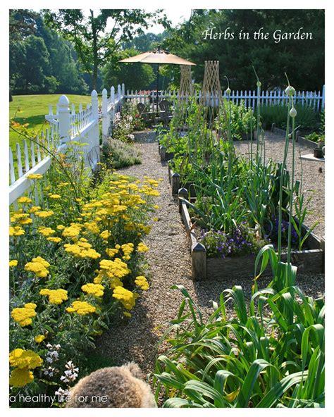 growing herbs   health  healthy life