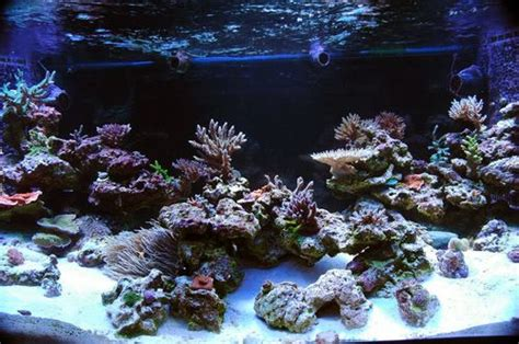 Aquascaping Live Rock by Captive Aquatics An Aquarium And Ecology Nano Reefs