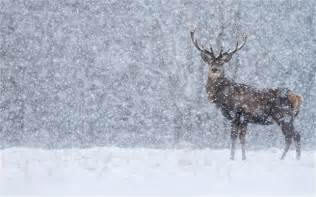 Examines the snow at zsl london zoo send your weather pictures
