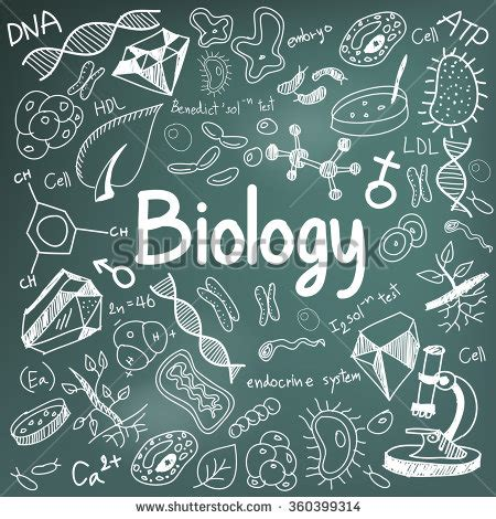 doodle tool royalty free biology science theory doodle 360384050