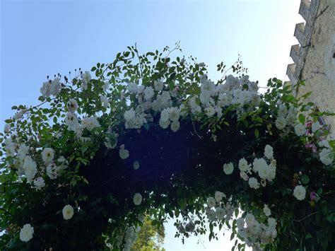 cespugli per giardino cespugli giardino 28 images cespugli sempreverdi