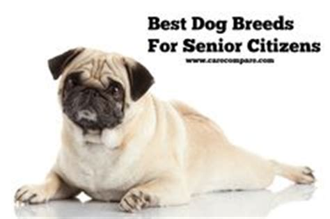 best breeds for seniors 5 best breeds for seniors senior living senior living