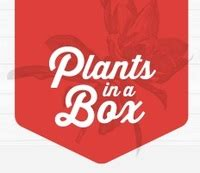 buy house plants online plants in a box buy indoor house plants online home services local business