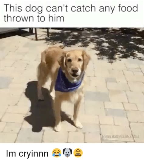 can t catch food this can t catch any food thrown to him im cryinnn food meme on sizzle